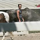 jude law horses03