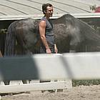 jude law horses30