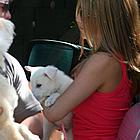 jennifer aniston new puppy05
