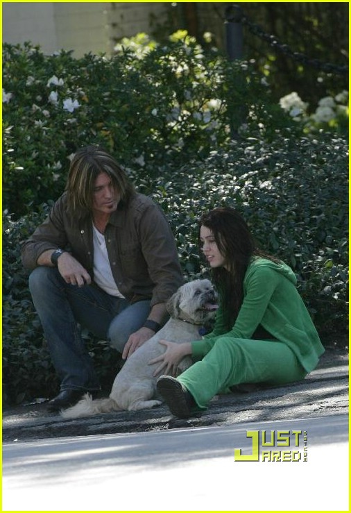 miley cyrus stray dog 21961761