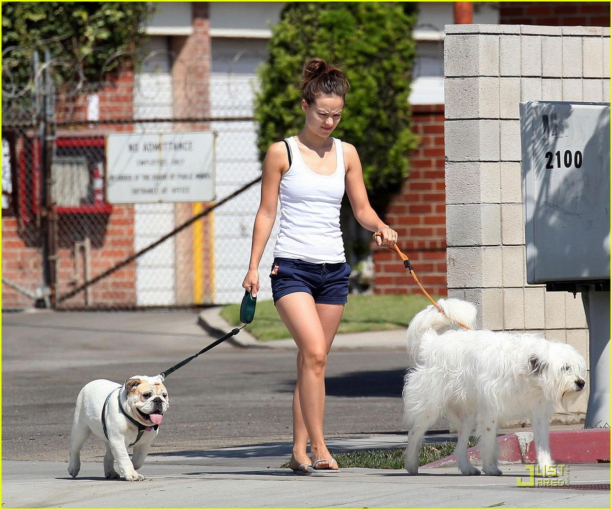 olivia wilde pooch passion 052114491