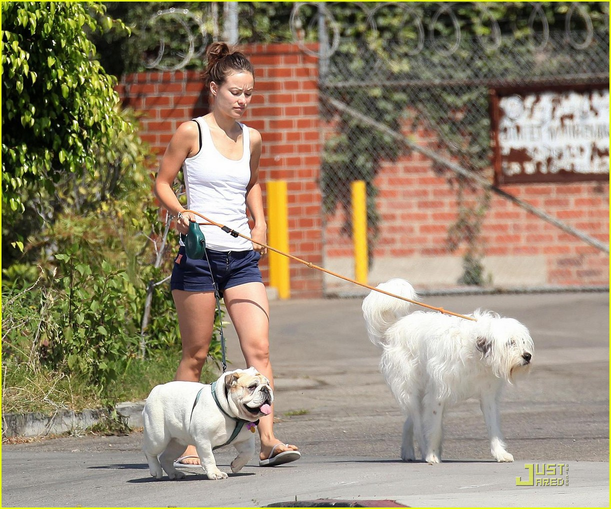 olivia wilde pooch passion 082114521