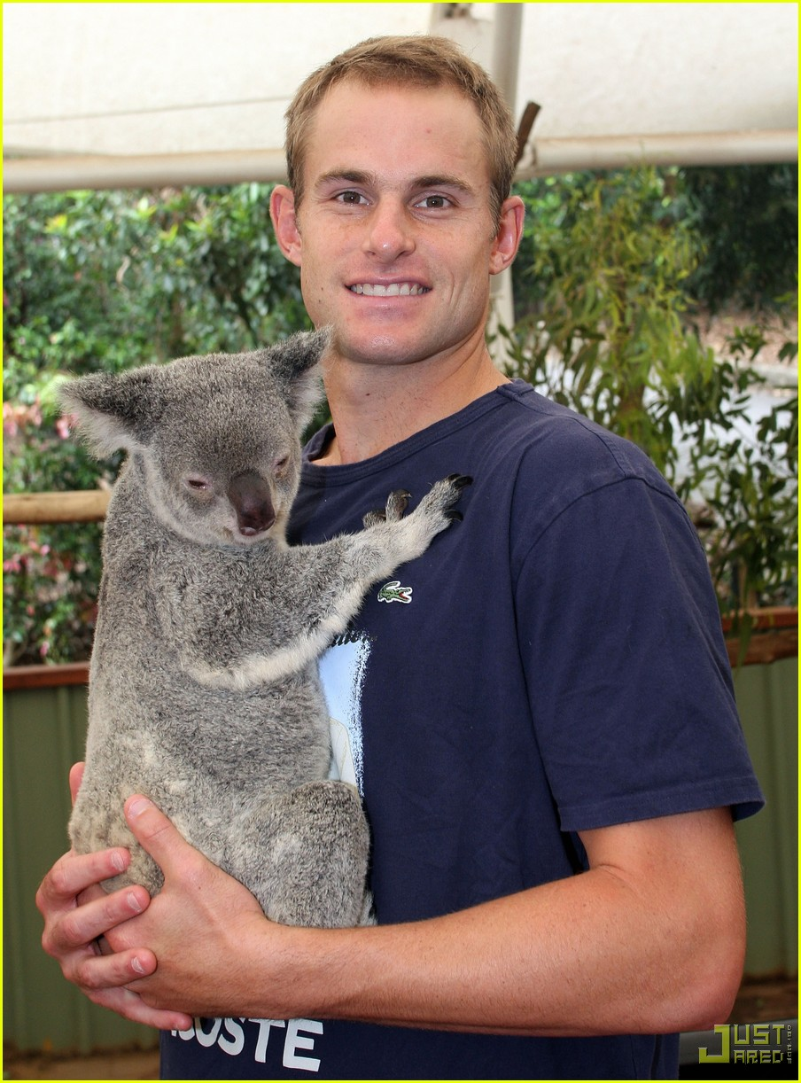 andy roddick brooklyn decker koala couple 11