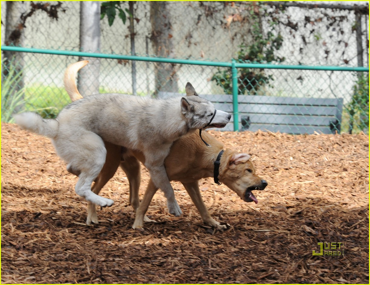 john krasinski emily blunt dog park 092429165