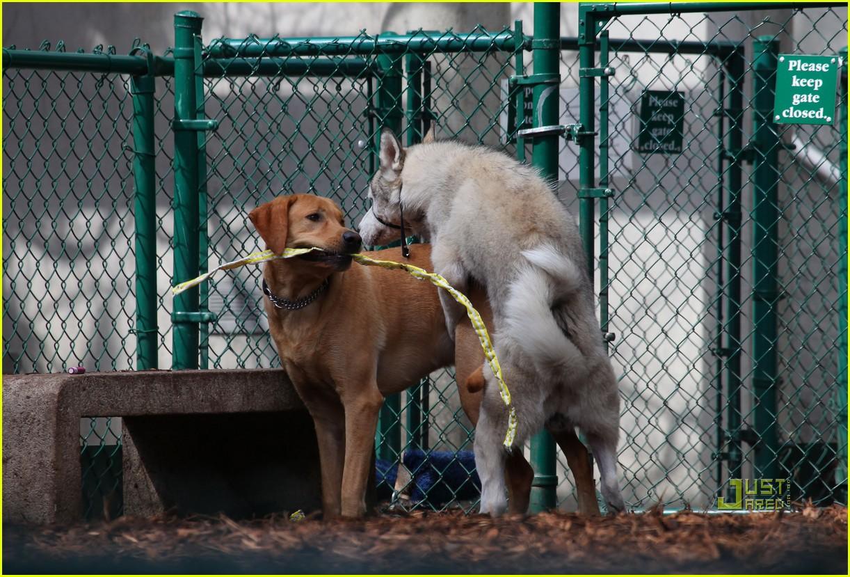 john krasinski emily blunt dog park 102429166