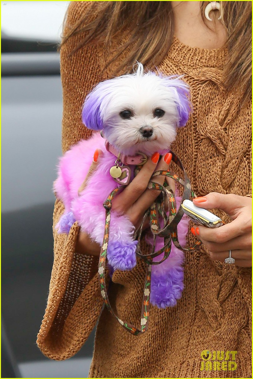 alessandra ambrosio purple pink pooch 022683747