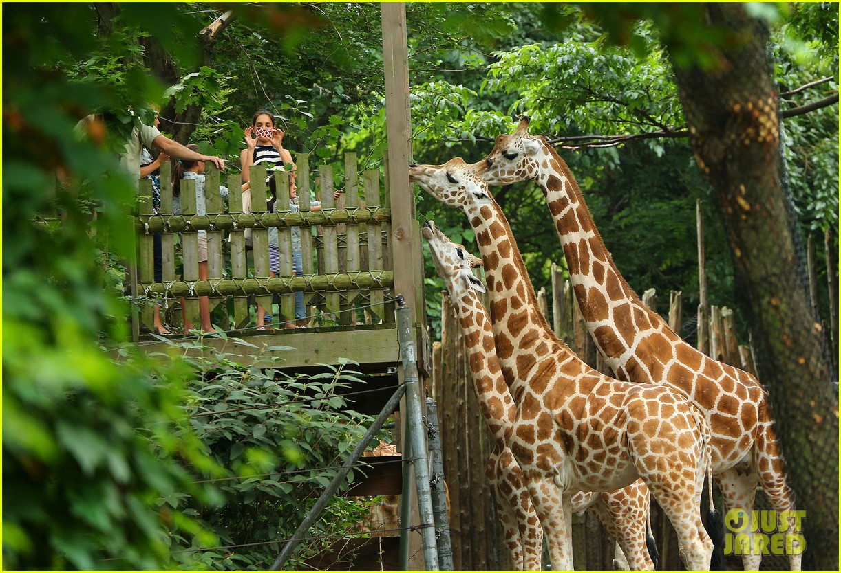 katie holmes suri feeds giraffes at bronx zoo 032693512