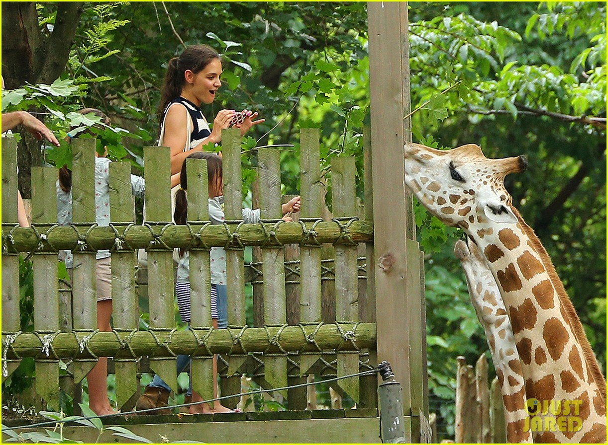 katie holmes suri feeds giraffes at bronx zoo 052693514
