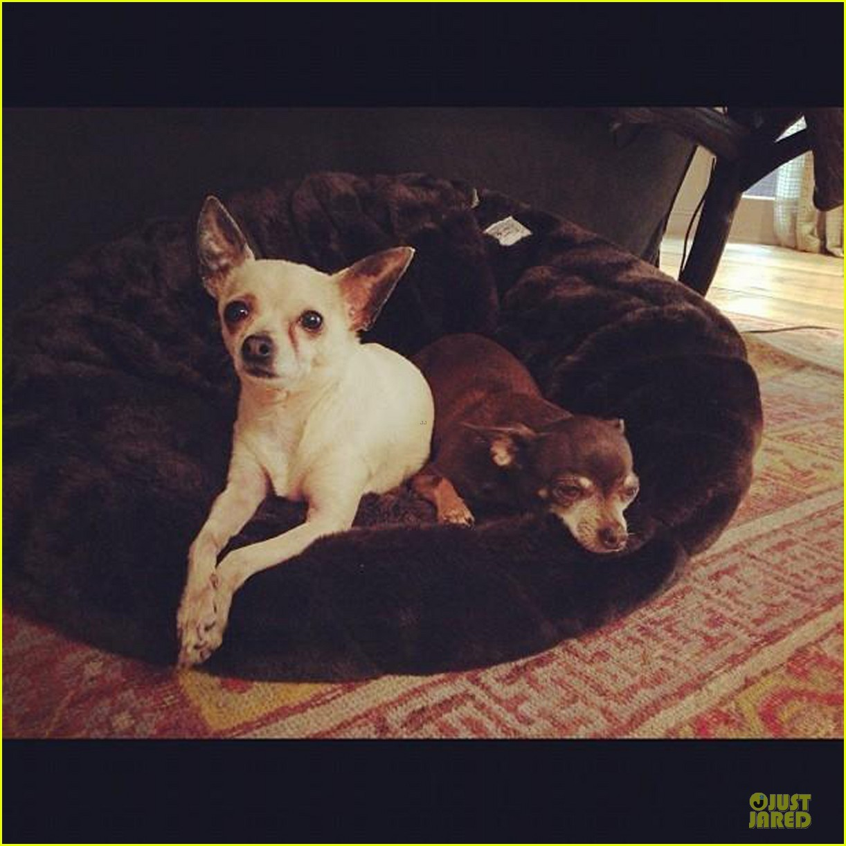 hilary duff shares moments with her little dogs 042769343