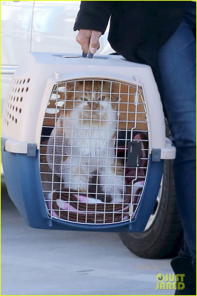 halle berry back at the vet with pet cat 042801866