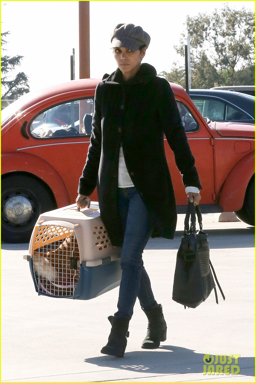 halle berry back at the vet with pet cat 052801867