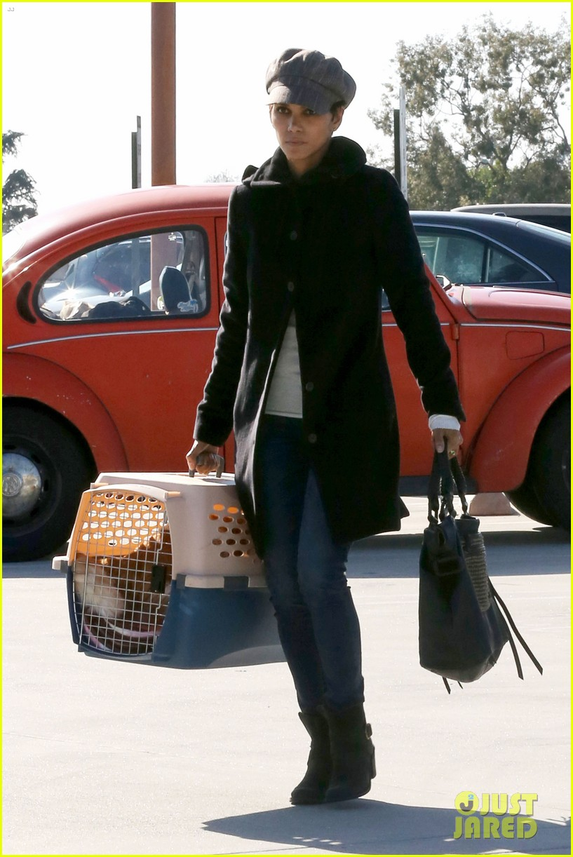 halle berry back at the vet with pet cat 112801873