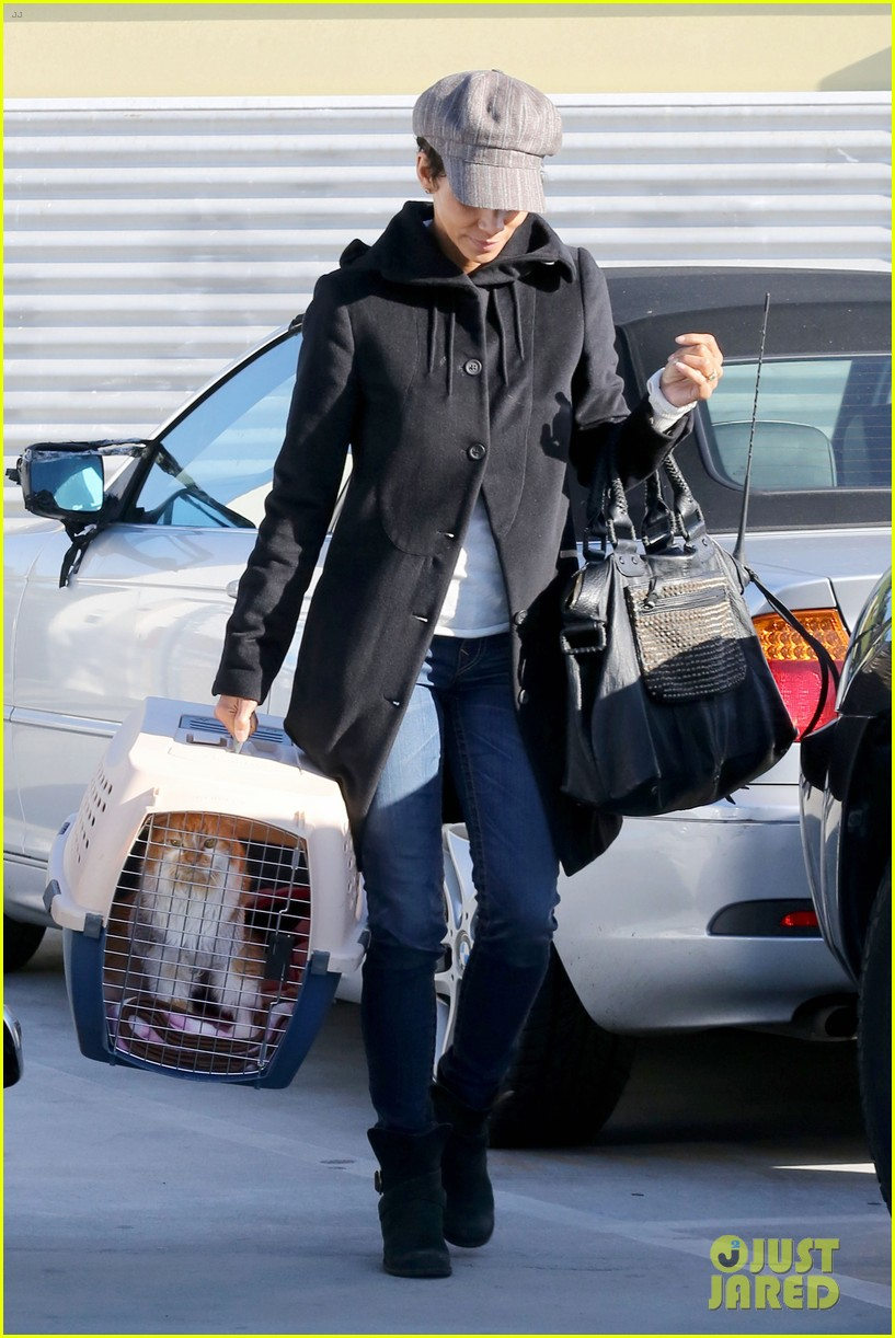 halle berry back at the vet with pet cat 142801876