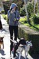 miley cyrus hoodie walk with pet pooch 15