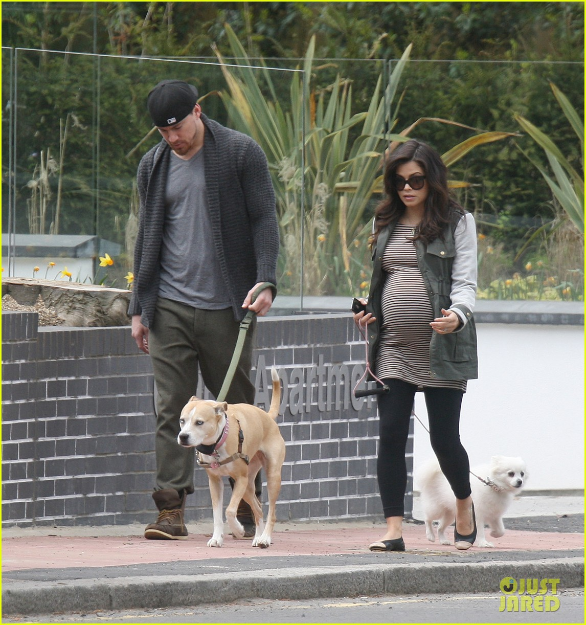channing tatum pregnant jenna dewan london dog walk 062860571