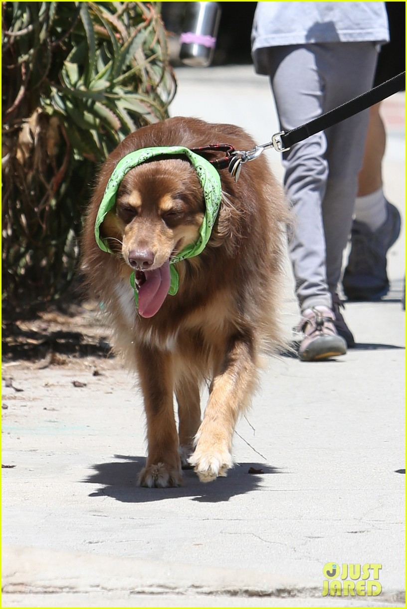 amanda seyfried justin long hang out with finn the dog 332937002