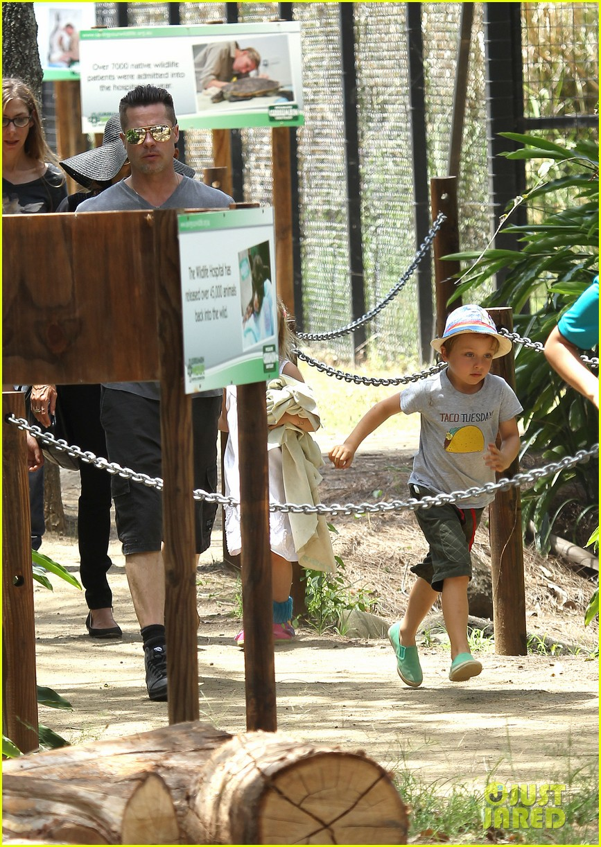 angelina jolie brad pitt visit the zoo with all six kids 093018245