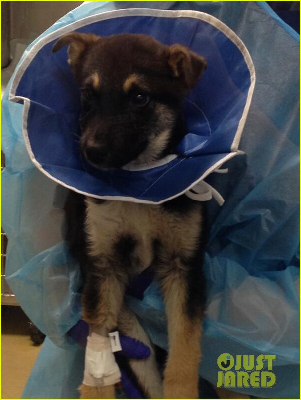 katherine heigl pray for ill sochi dog rescue 023060443