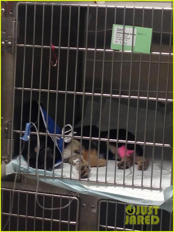 katherine heigl pray for ill sochi dog rescue 043060445