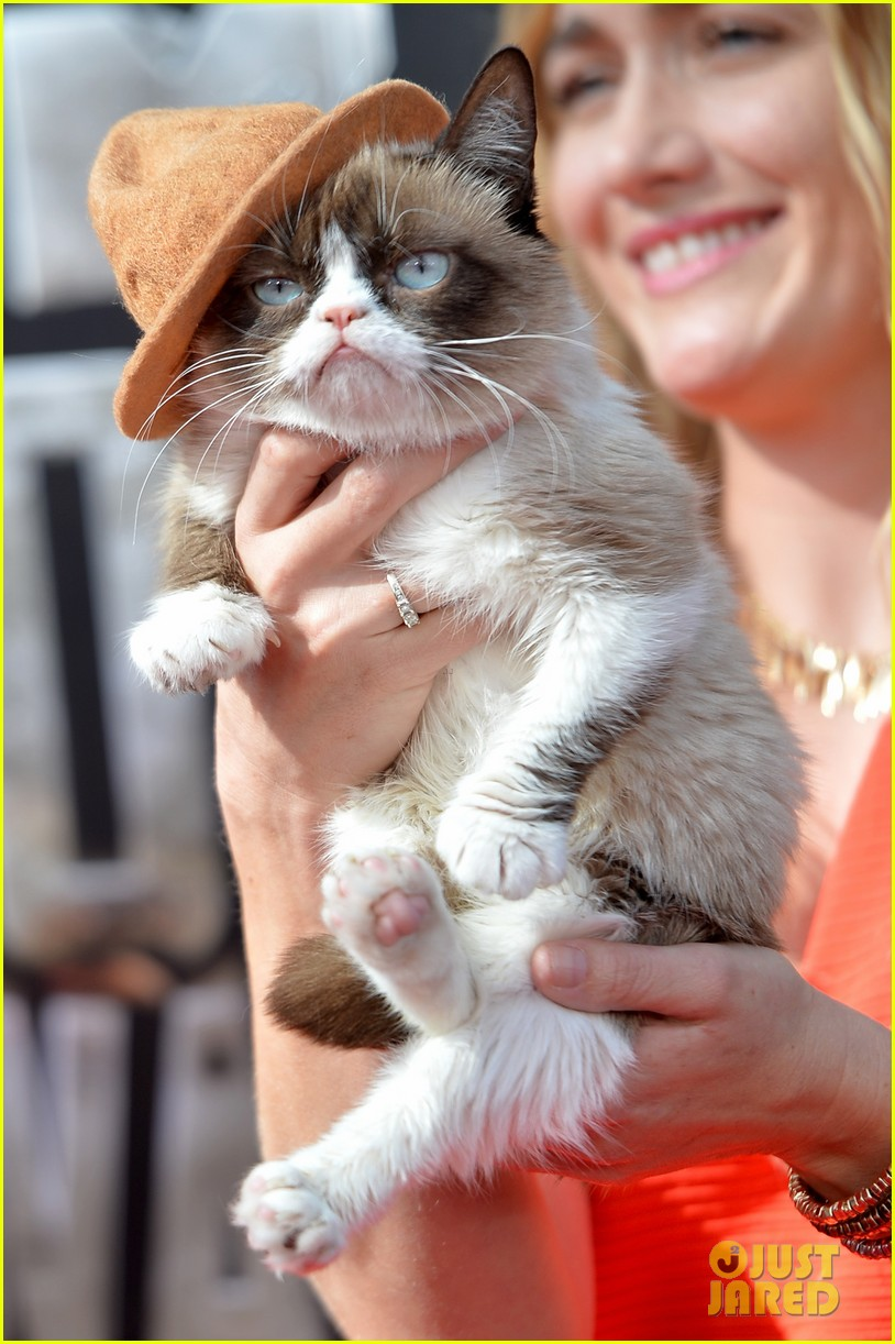 grumpy cat gets better seat at mtv movie awards 2014 than nick lachey 063091239