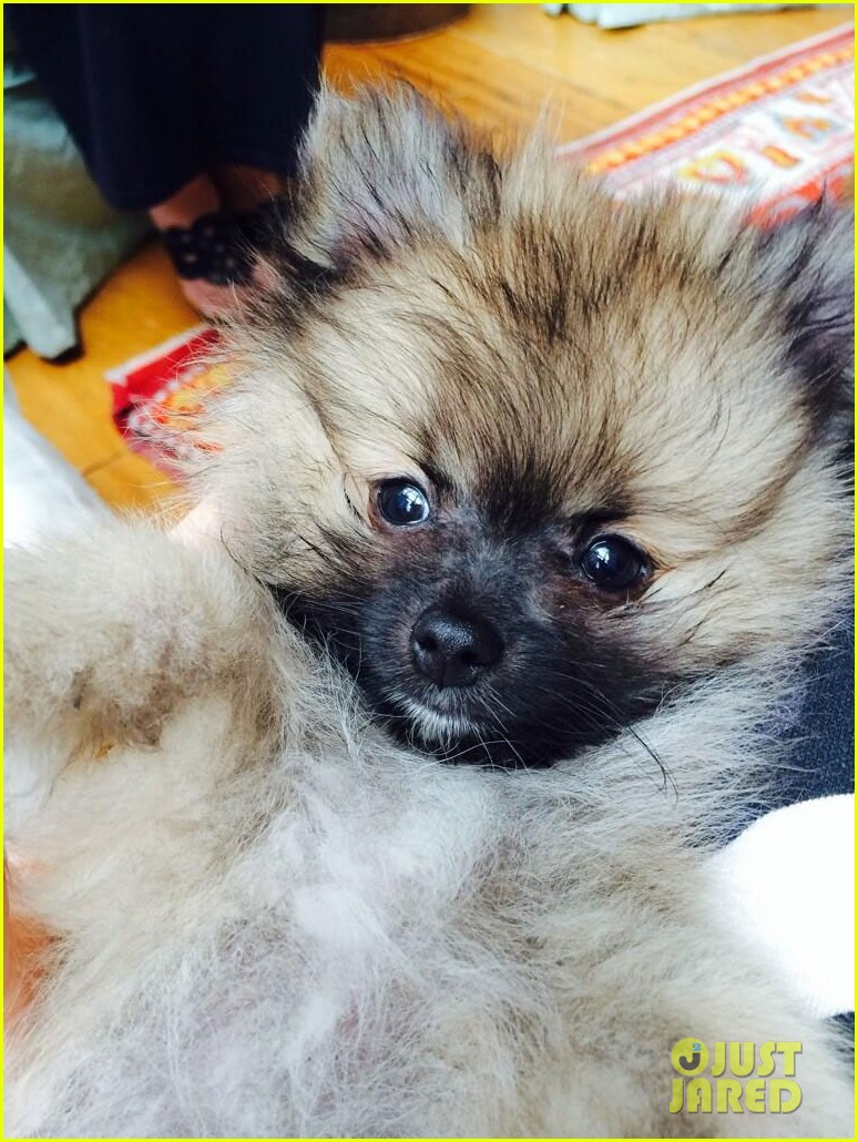 miley cyrus gets cute new puppy 013084665