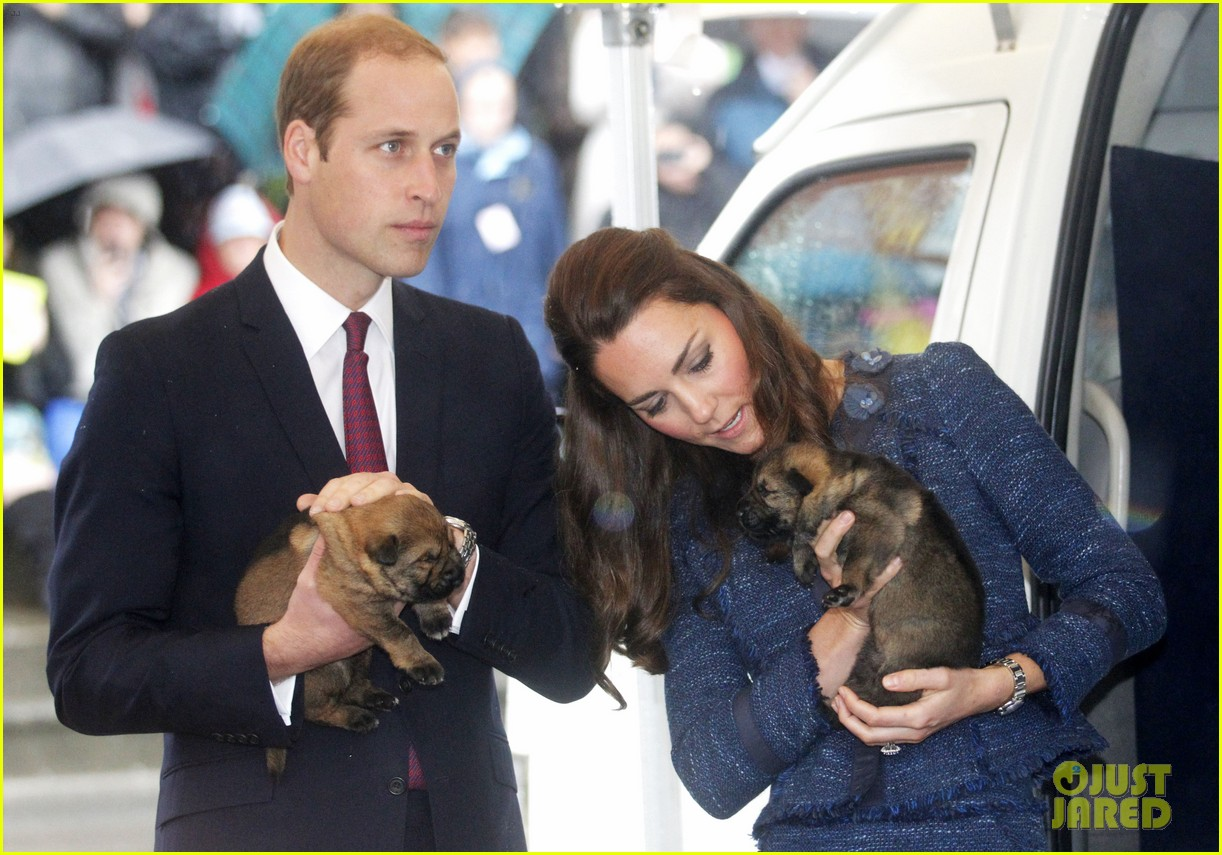 prince george makes appearance parents play with puppies 13
