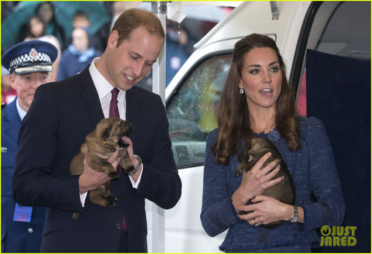 prince george makes appearance parents play with puppies 163092951