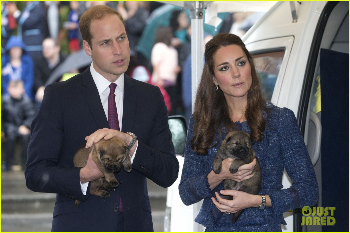 prince george makes appearance parents play with puppies 173092952