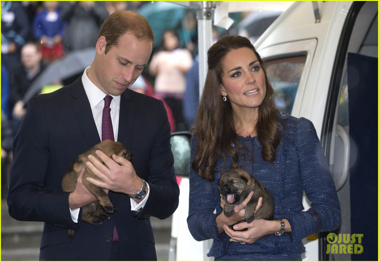 prince george makes appearance parents play with puppies 183092953