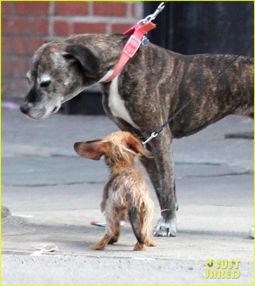 leighton meester windy walk pups pda adam brody 053085437