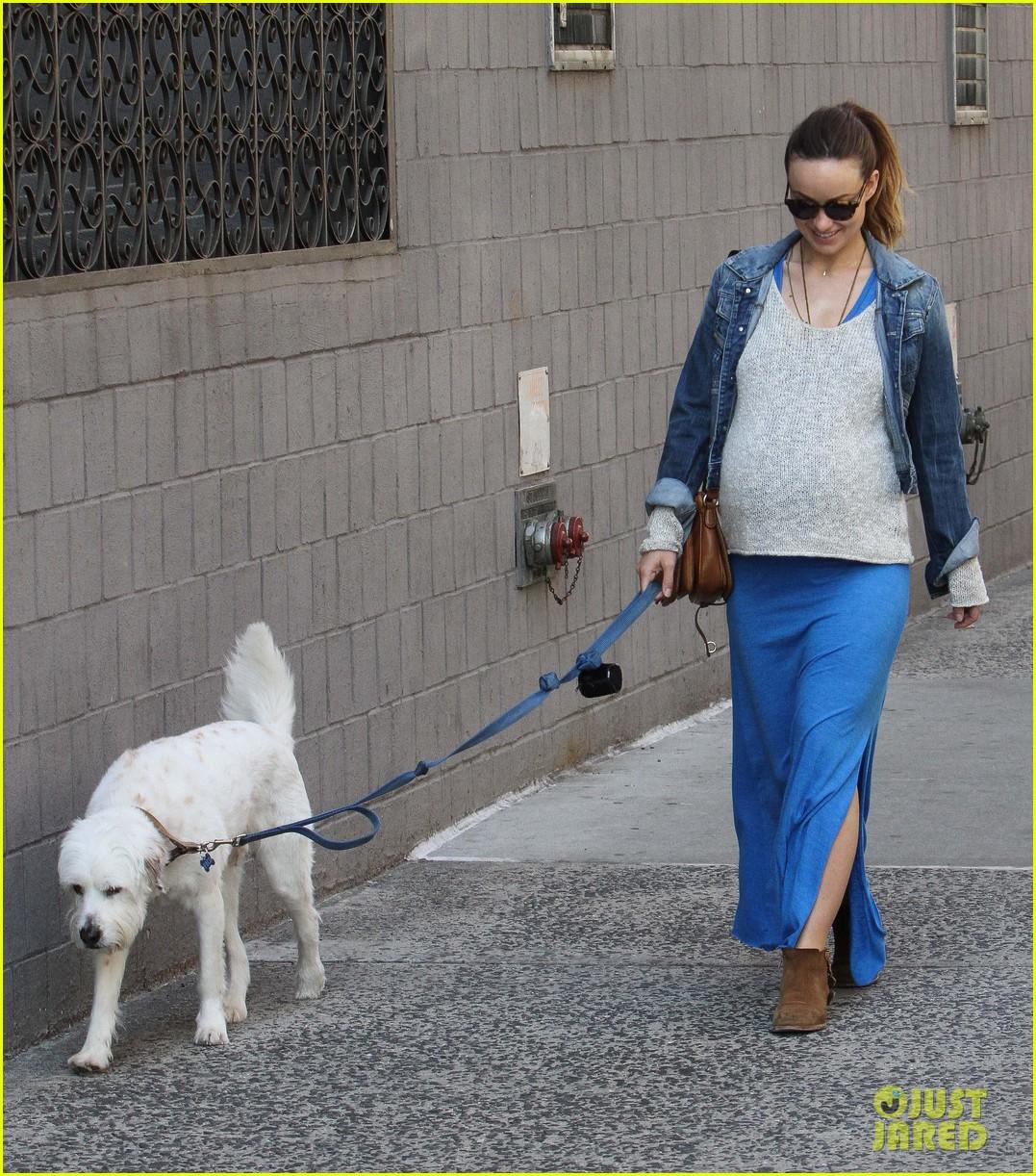 olivia wilde growing baby bump dog walk 193092193
