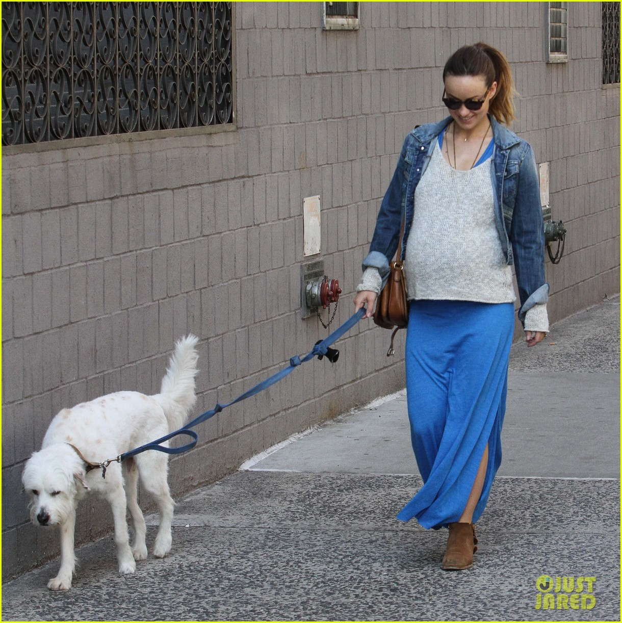 olivia wilde growing baby bump dog walk 203092194