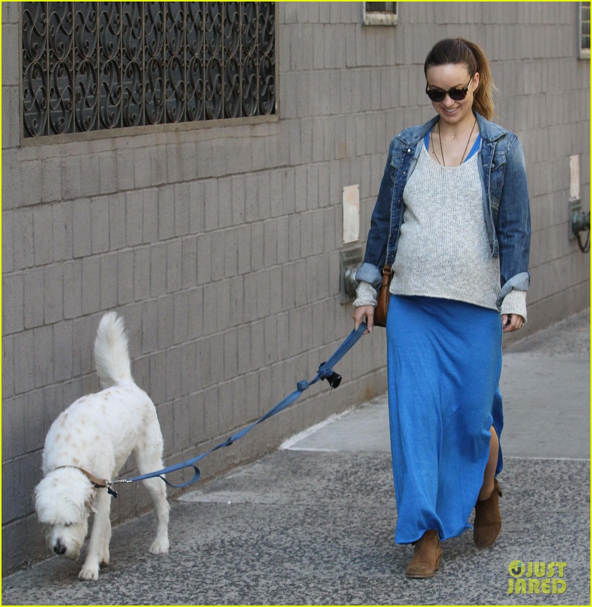 olivia wilde growing baby bump dog walk 213092195