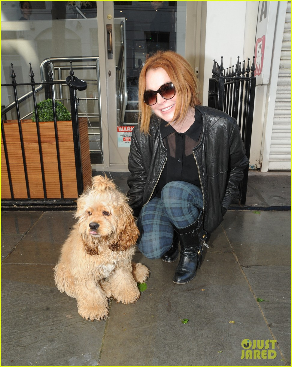 lindsay lohan adorable dog london 053110359