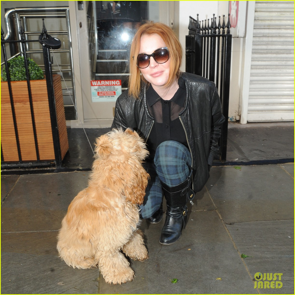 lindsay lohan adorable dog london 123110366