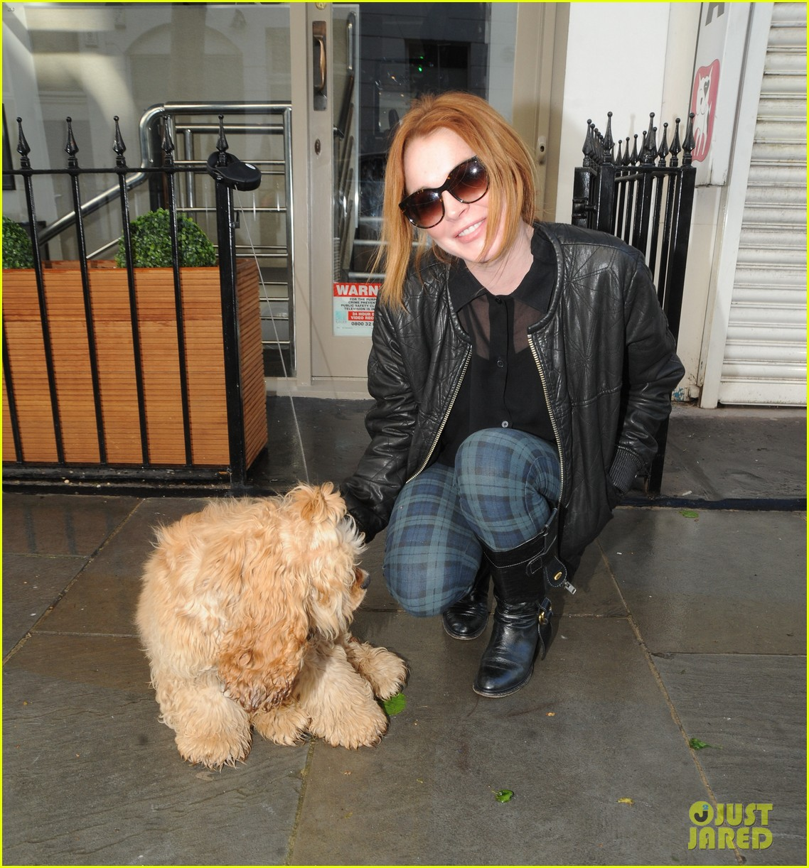 lindsay lohan adorable dog london 153110369