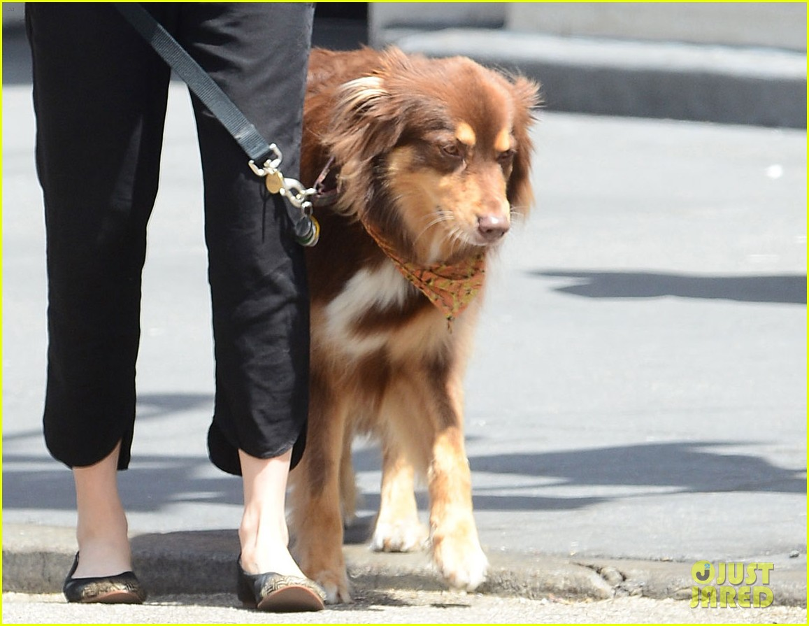 amanda seyfried is all about mcqueen on her dog walk 033108765