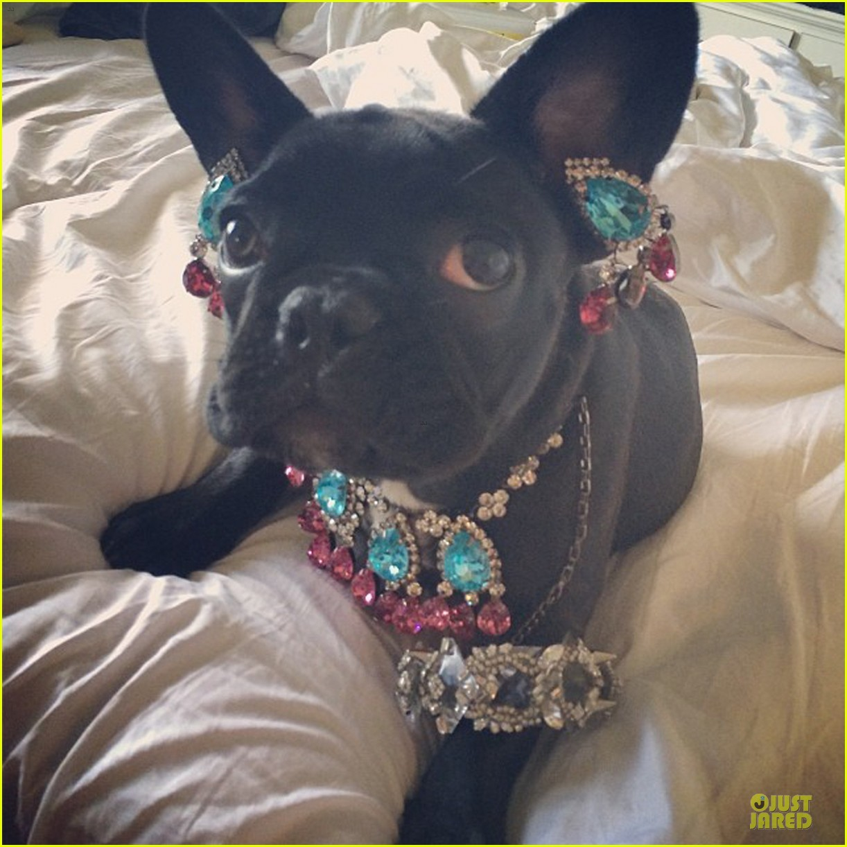 peta thinks lady gaga asia is adorable without jewels 053142240