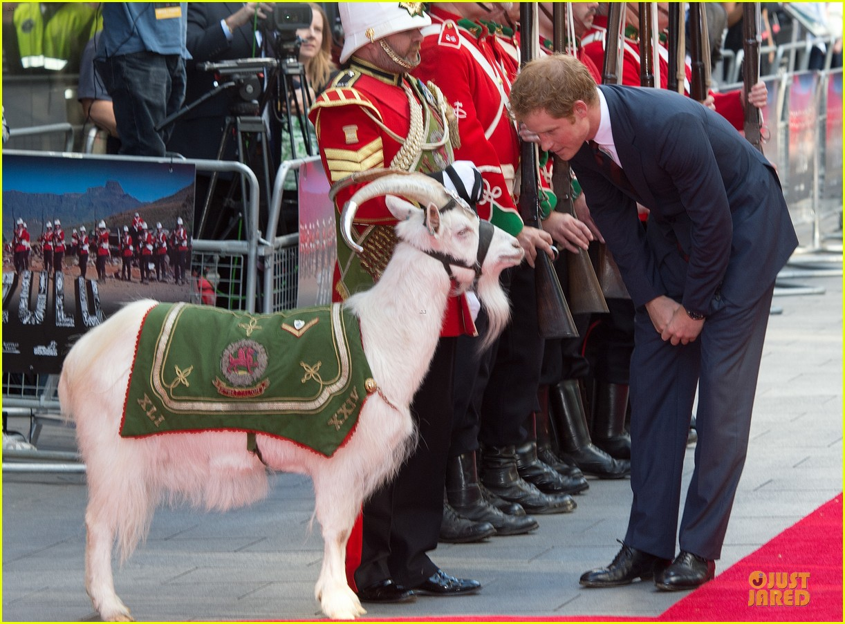 prince harry interaction with goat melt your heart 08