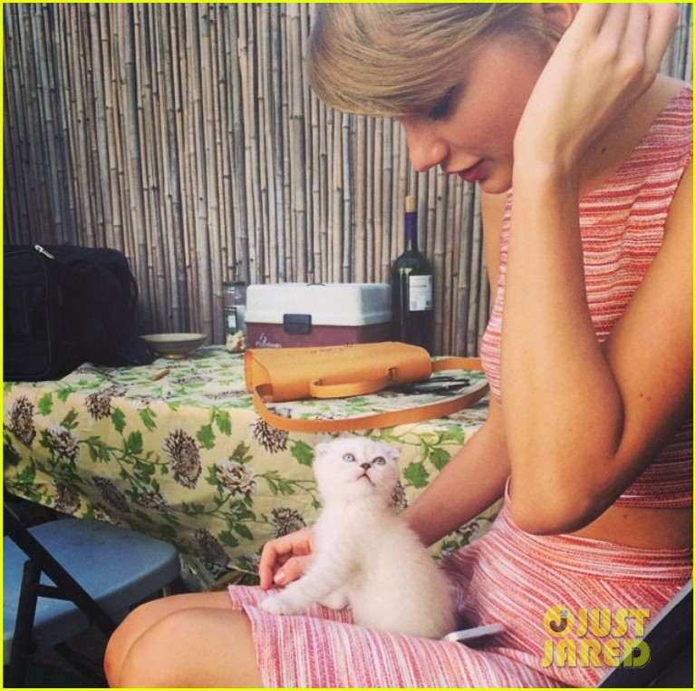 taylor swift new kitten olivia benson 013138533