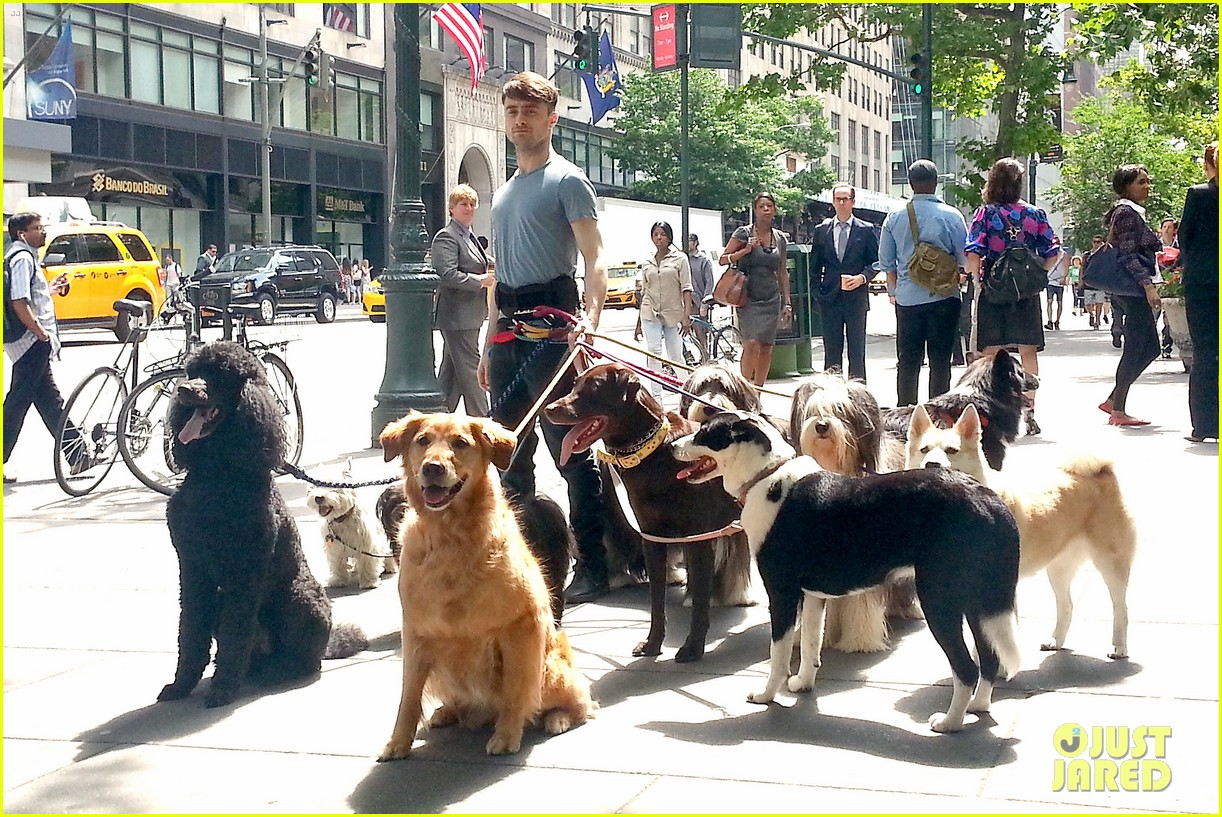 daniel radcliffe dog walker trainwreck nyc set 133147560