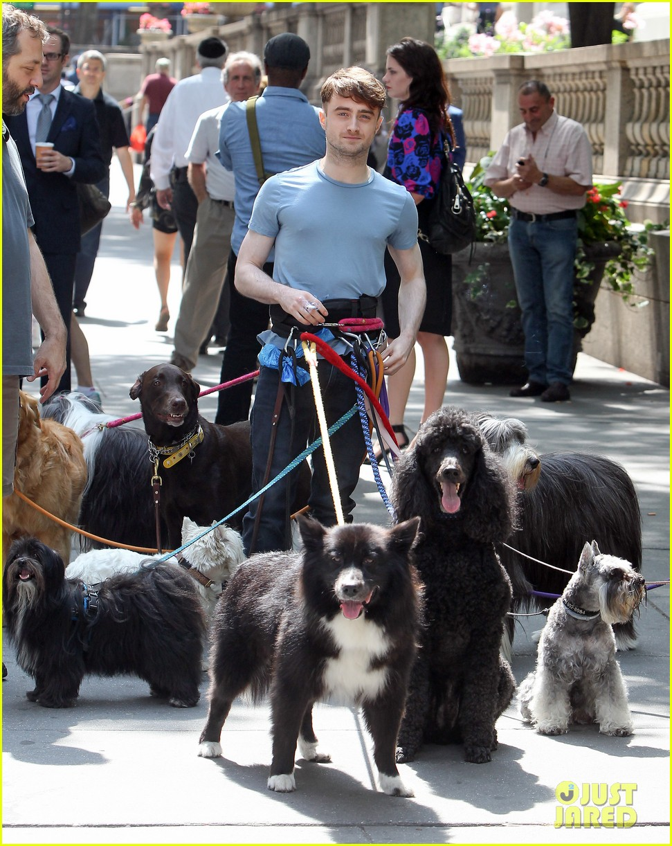 daniel radcliffe dog walker trainwreck nyc set 193147566