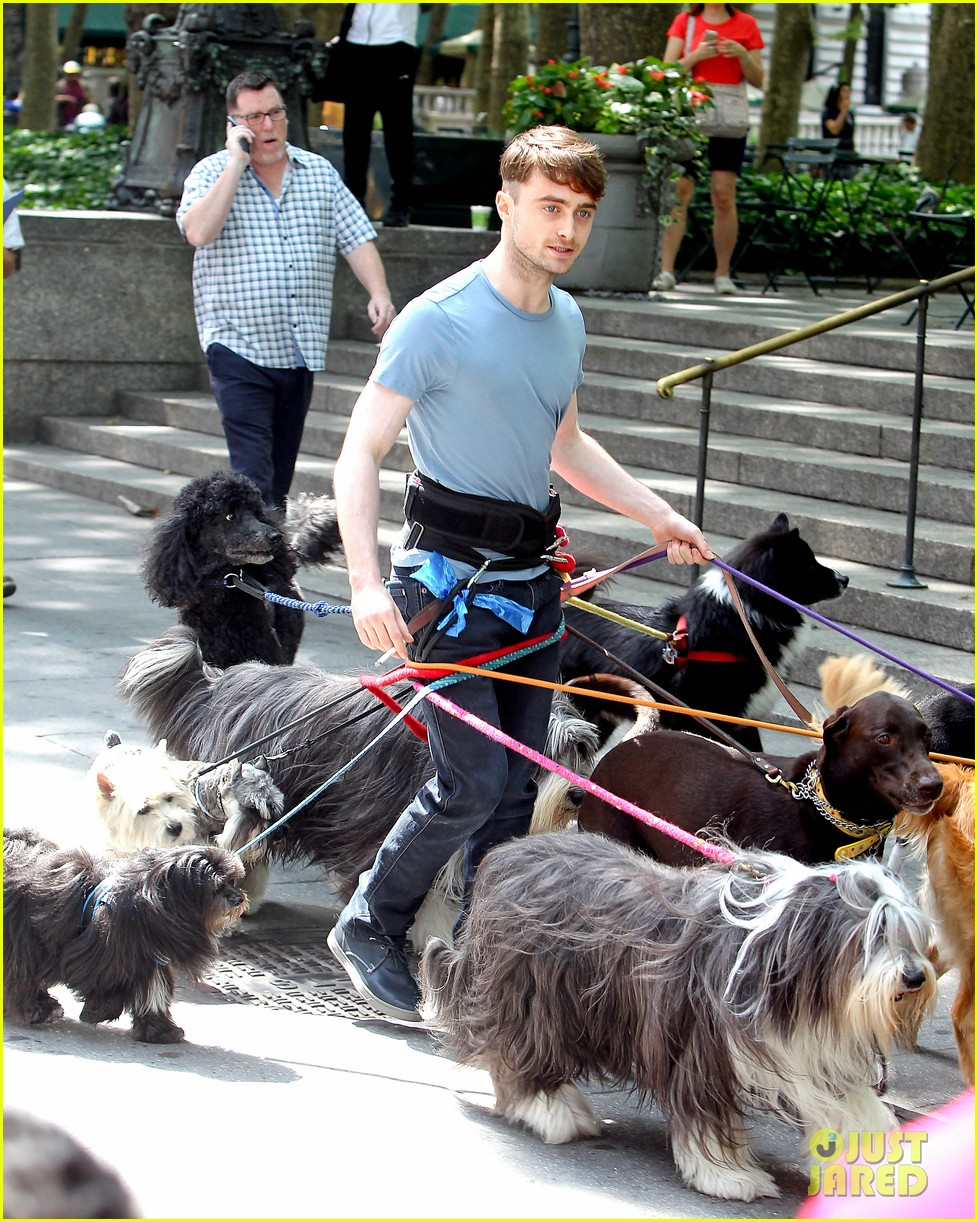 daniel radcliffe dog walker trainwreck nyc set 223147569