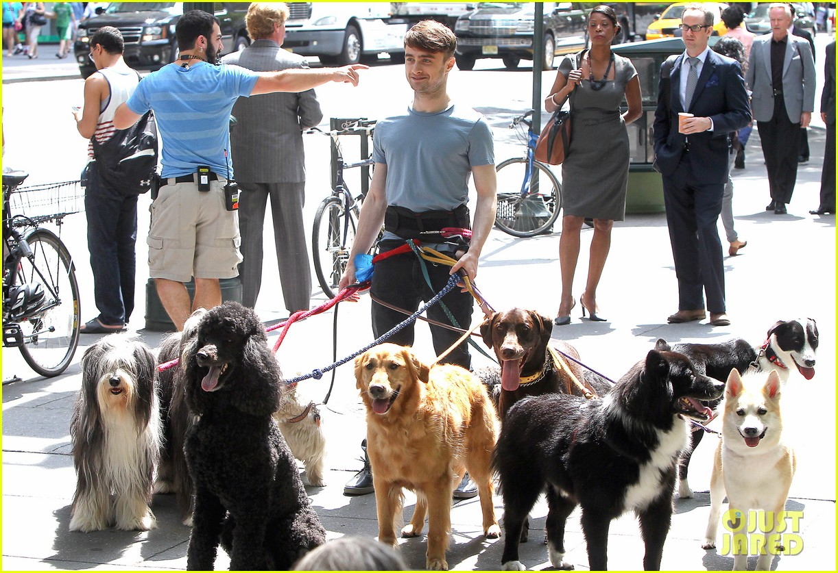 daniel radcliffe dog walker trainwreck nyc set 243147571