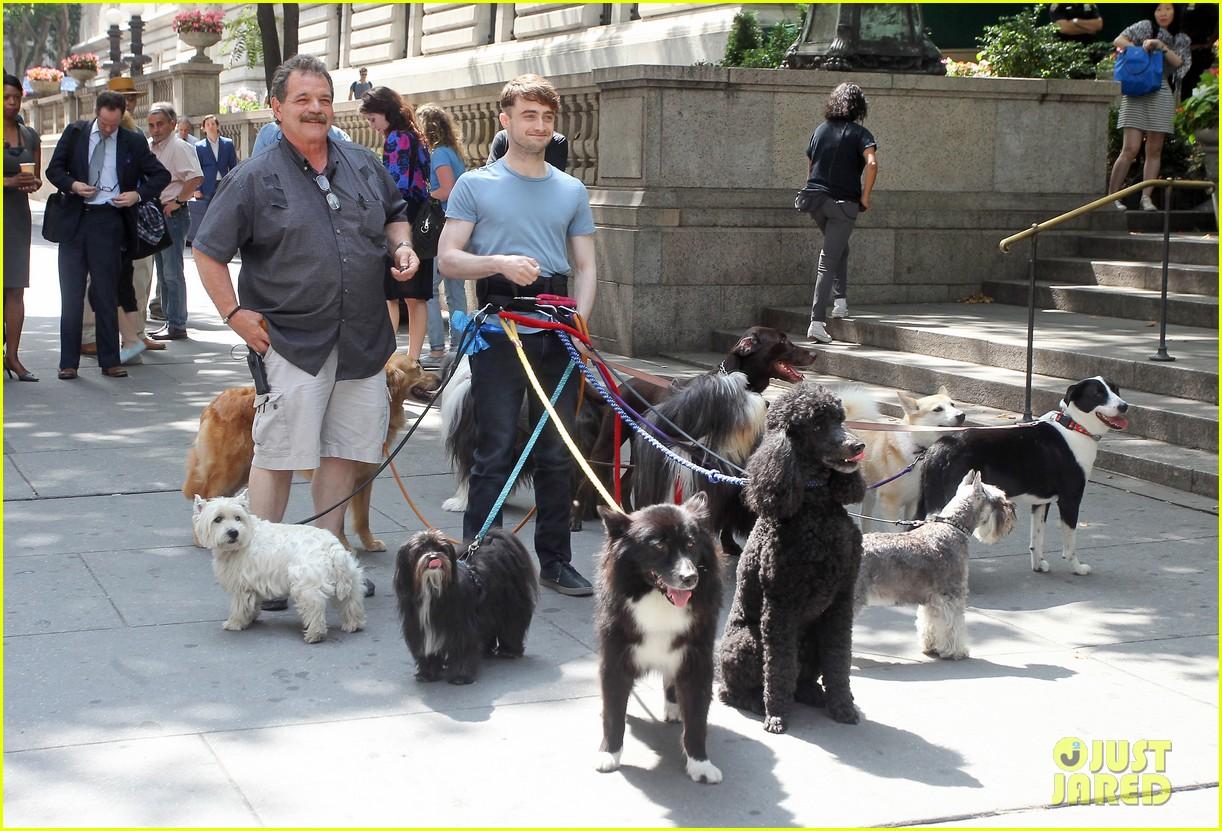 daniel radcliffe dog walker trainwreck nyc set 283147575