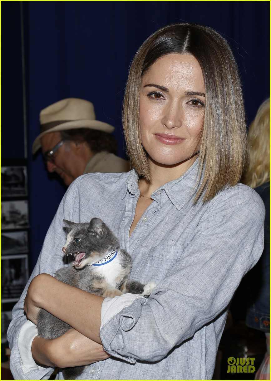 rose byrne looks for the right kittens 063178927