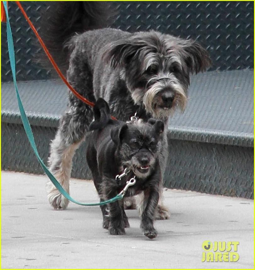 zachary quinto boyfriend miles mcmillan dog walk tribeca 053182223