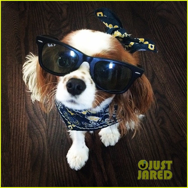 meet naya rivera puppy emmy laser appt 043188664