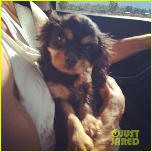 meet naya rivera puppy emmy laser appt 153188675