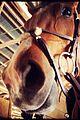 ian somerhalder nikki reed ride a horse together 02